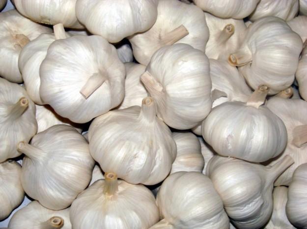 Manfaat Bawang Putih Untuk Penyakit Scabies